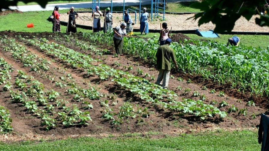 Clarkston International Garden Photo by Global Growers