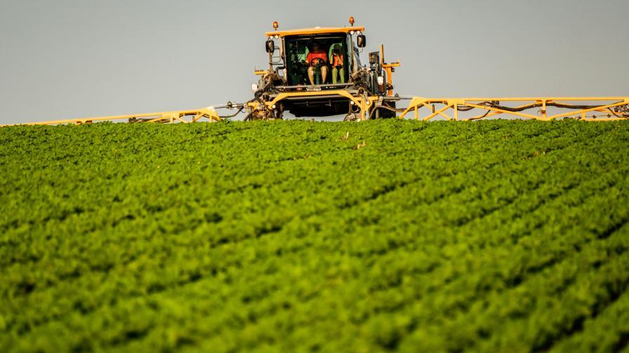 Fungicide application. Photo courtesy of BASF