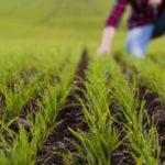 Grower Field