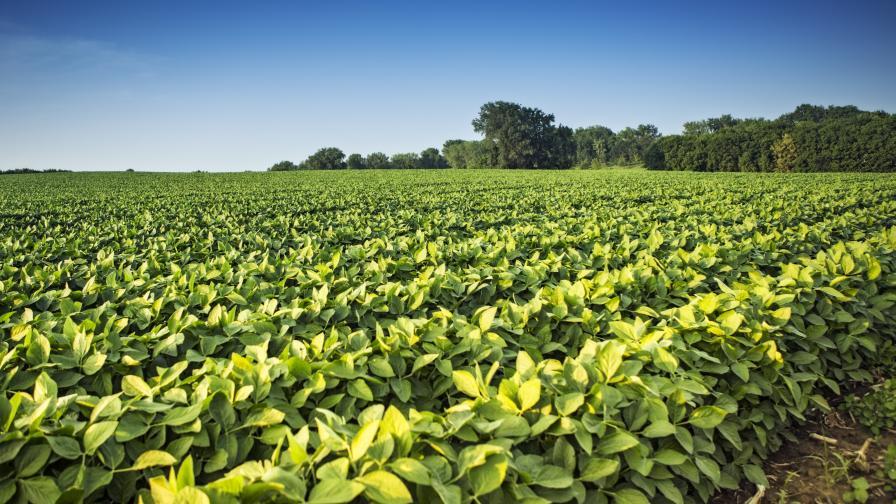 Soybean insecticide choices grow_photo courtesy BASF