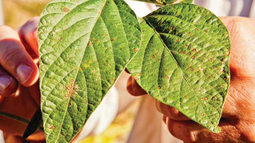 Soybean growers have been dealing with strobilurin-resistant strains of frogeye leaf spot.